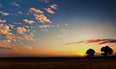 Hz. Peygamber'in Ağaçlandırmaya Teşvikleri ve Tabiatını Korumaya Aldığı Bölgeler