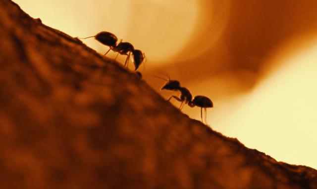 Arıya ve Karıncaya Vahyeden Ekoloji